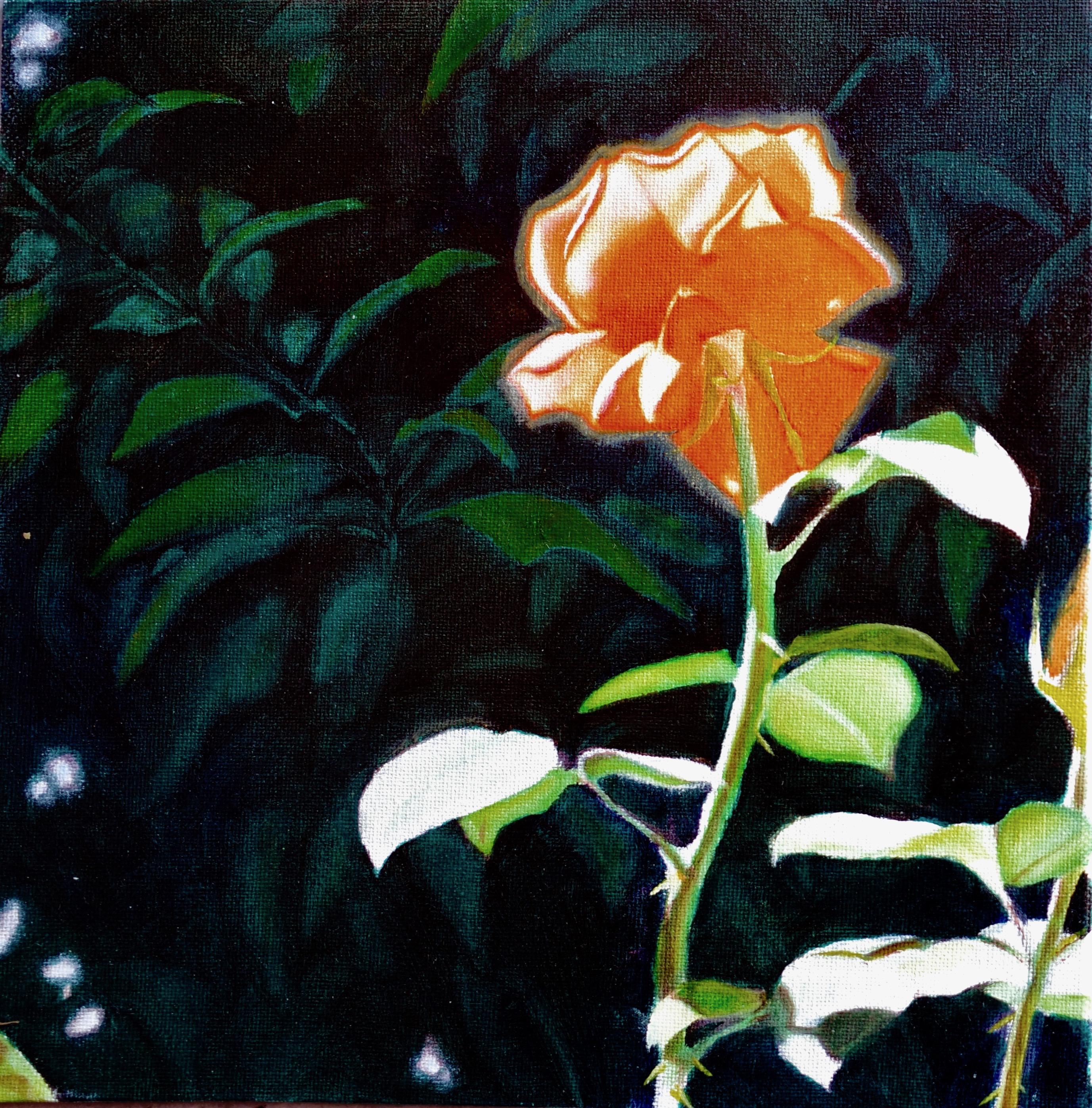 Rose Variante II